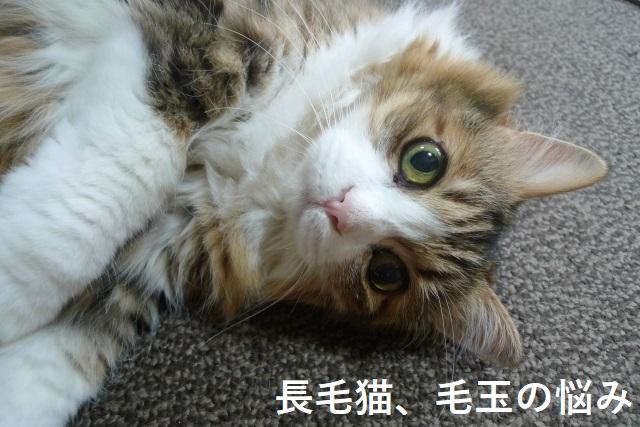 玉 猫 取り 方 毛 猫の毛玉の取り方・カットの方法!毛球症対策はどうしたらいい?