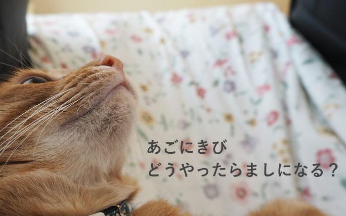 方 治し 猫 ニキビ 顎 【獣医師監修】猫のニキビ~あご周りにできるブツブツの原因と対処法・予防法~